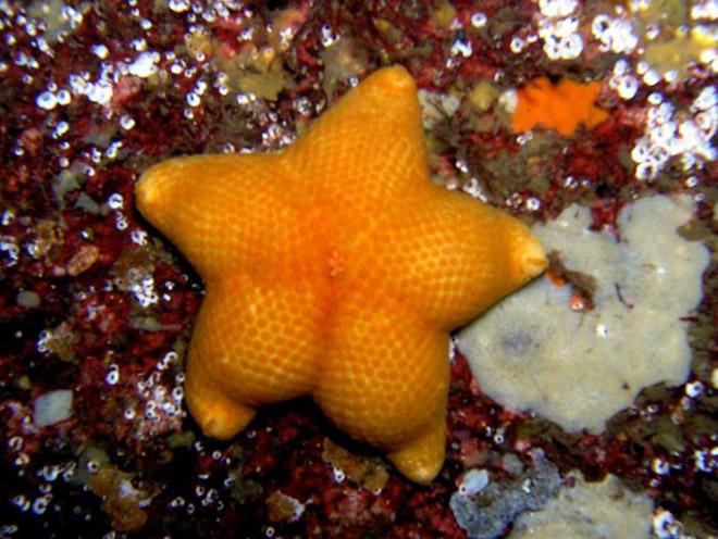 Estrella de mar a tope.