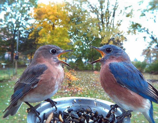 Foto de la cámara del alimentador de pájaros.