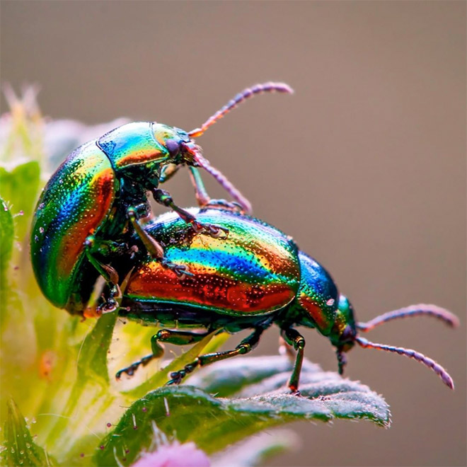 Haz el amor con los insectos.