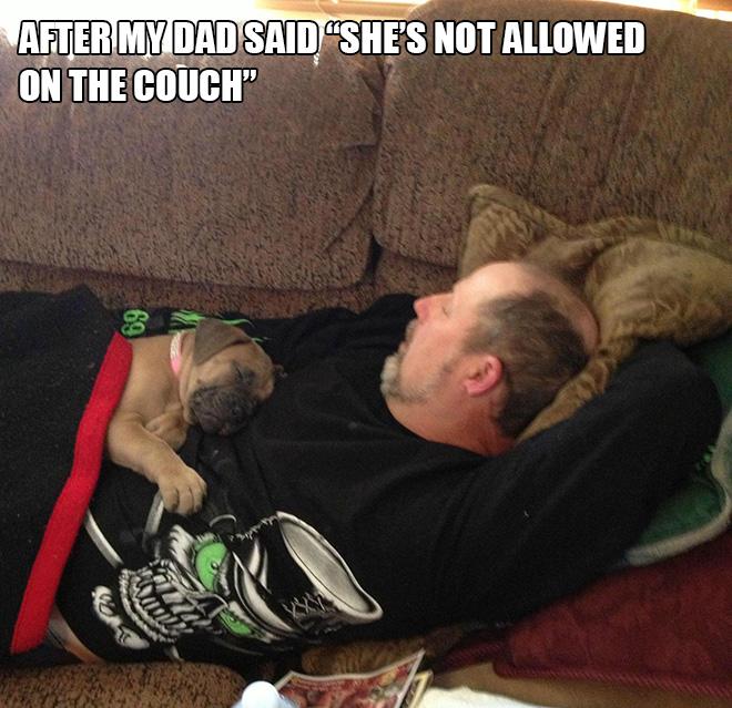 Perro contra papá.