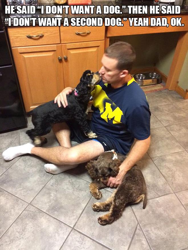 Papá versus perros.