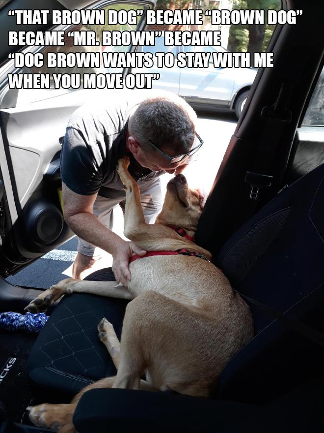 Papá versus perro marrón.