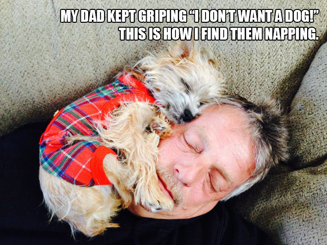 Papá versus perro.