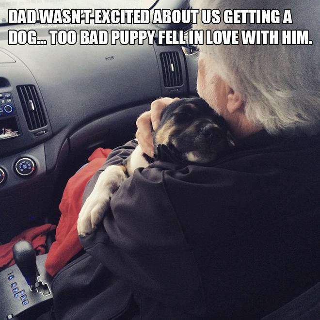 Papá versus cachorro.