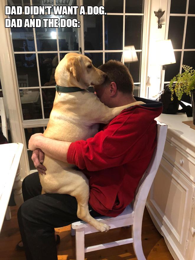 Papá no quería un perro. Papá y el perro: