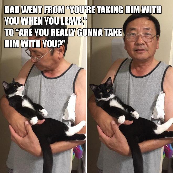 Papá versus gato.
