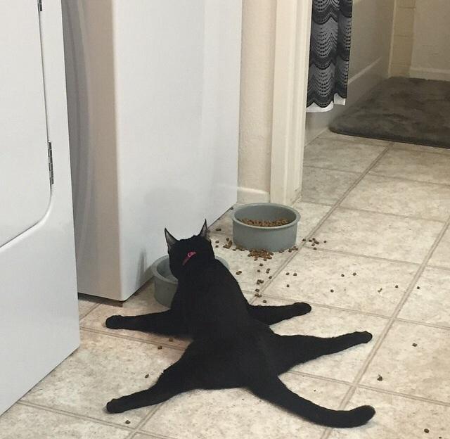 Algunos gatos son raros ...