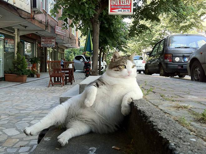 Gato sentado como un viejo cansado.