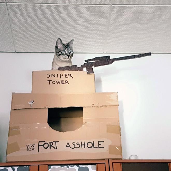 Caja de cartón épica para gatos.