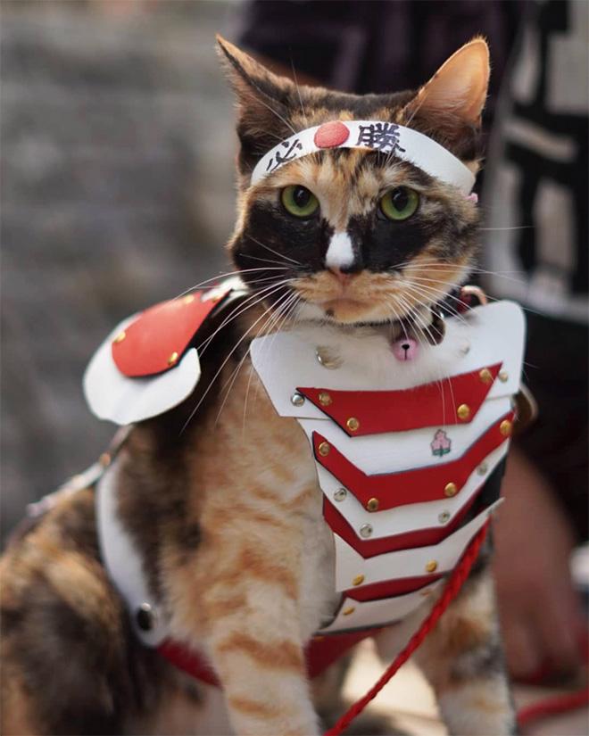 Gato en armadura de combate.