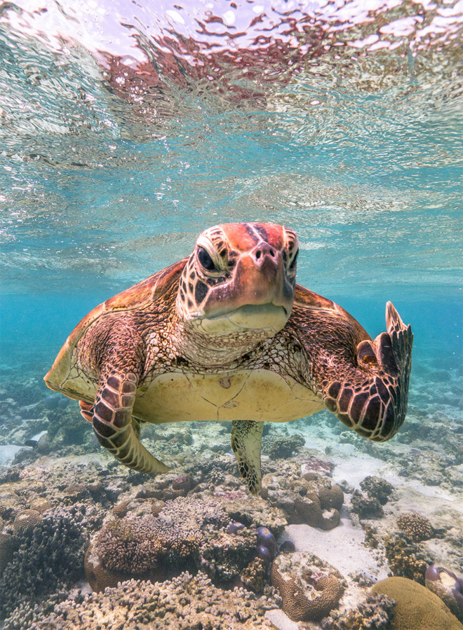 Foto divertida de los premios Comedy Wildlife Photography Awards 2020.