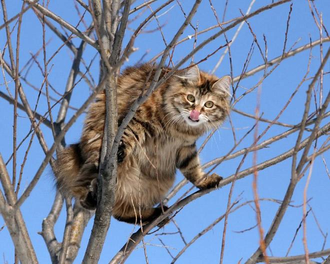 Catbird.