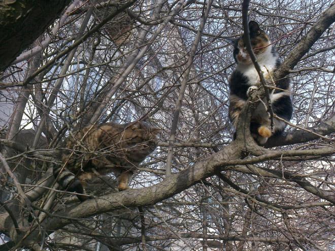 Birdcat.