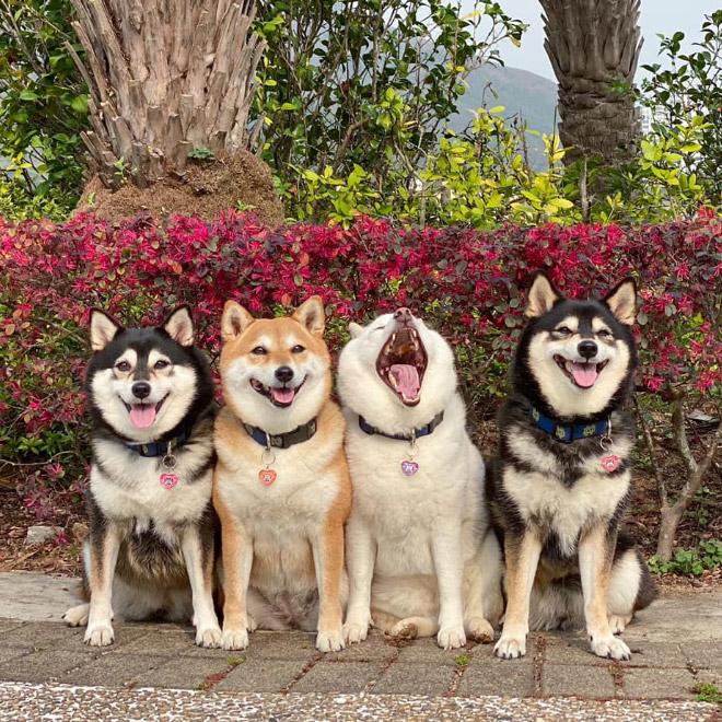 Perro gracioso photobombing.