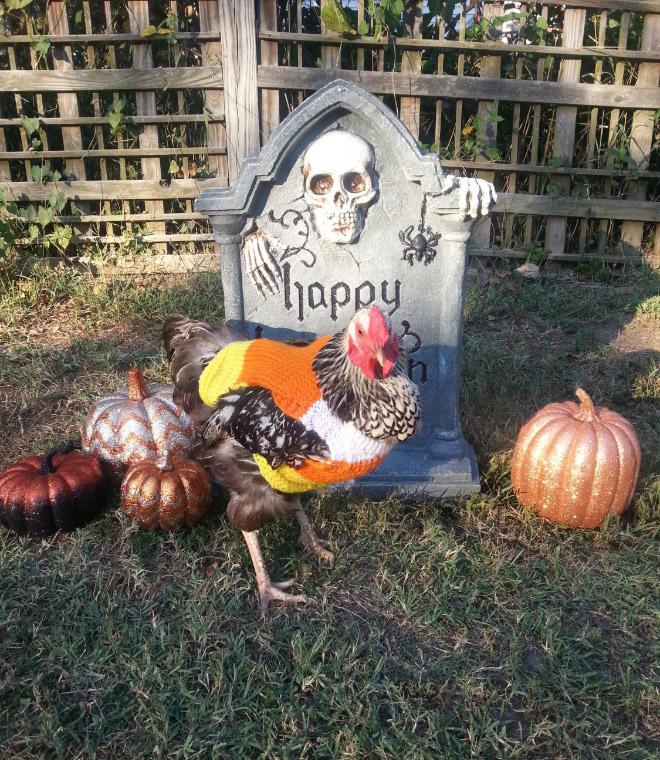 Moda de pollo de Halloween.