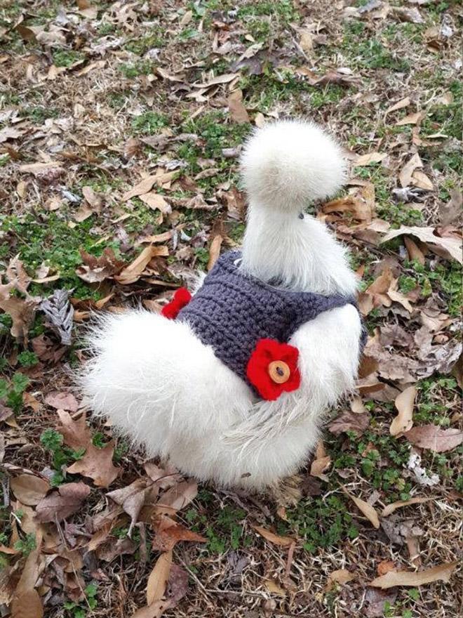 Última moda de pollo.
