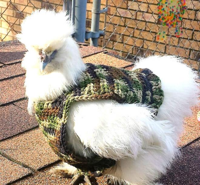 Jersey de pollo camuflaje.
