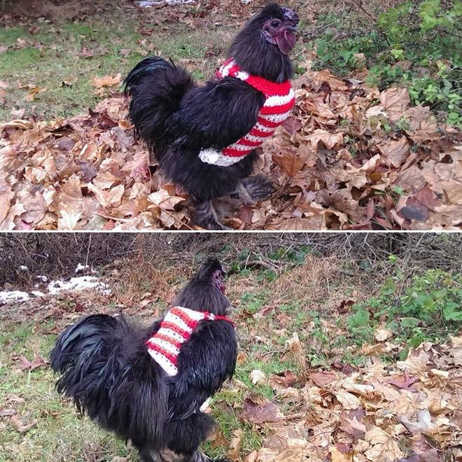 Jersey de gallina Wally.