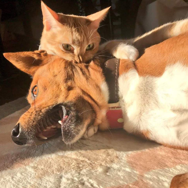 Aterrorizado del gato.