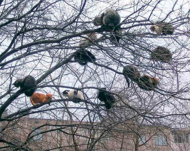 Estos gatos fueron criados por pájaros.