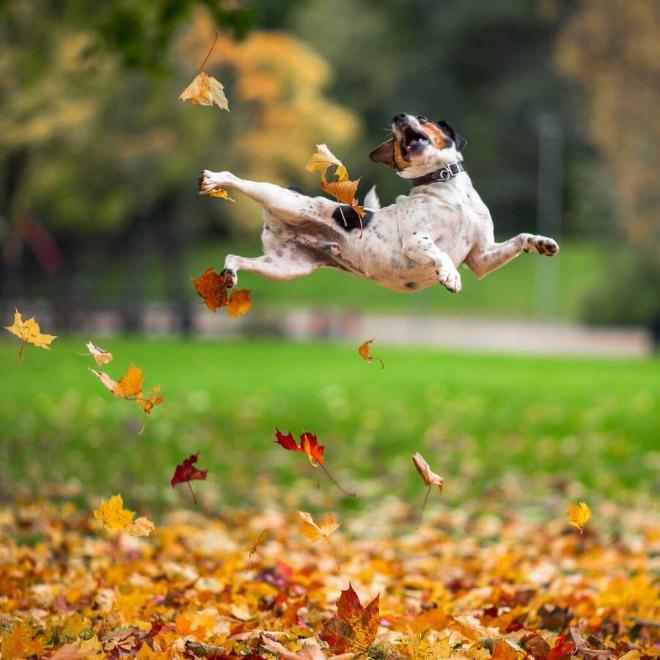 A algunos perros les encanta el otoño.