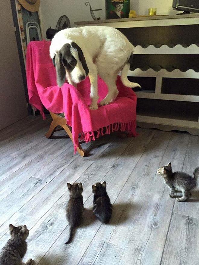 Aterrorizado de los gatos.