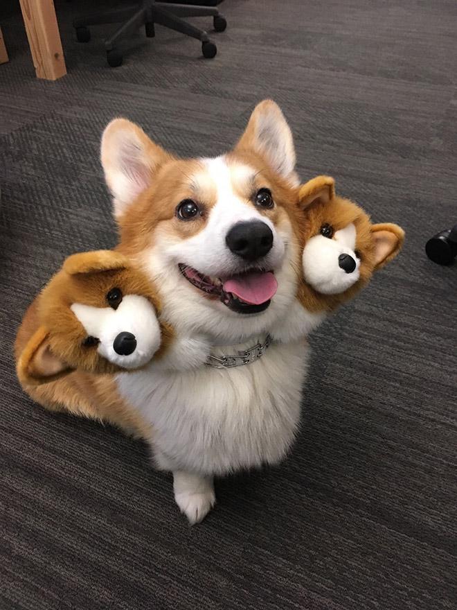 ¿Aún no has encontrado un disfraz para tu perro este Halloween? ¡Echa un vistazo a esta magnífica máscara de perro Cerberus!