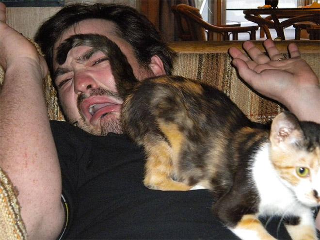 Los gatos son tontos.
