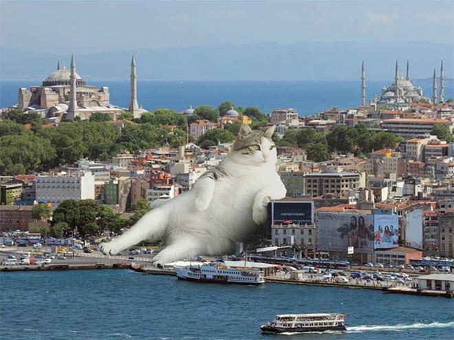 Gato Godzilla.