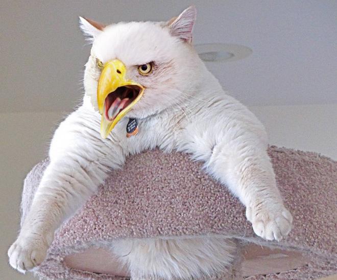 Gatos + Aves = Cirds.