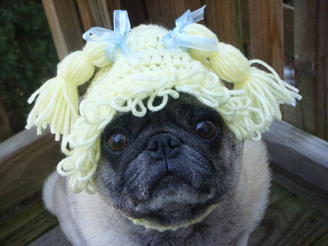 Pug triste con un gorro de crochet.