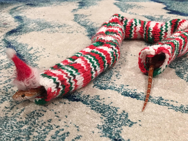 Serpiente en un suéter.