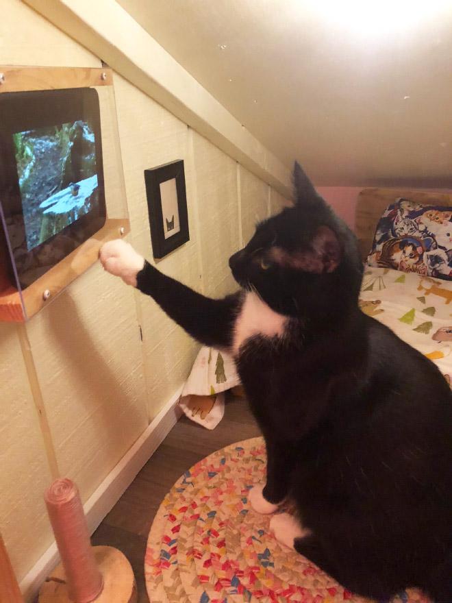 A este gato le encanta ver la televisión.