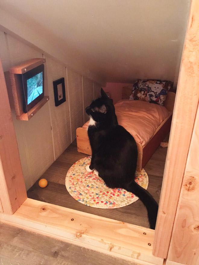 Gato viendo la televisión en su habitación.