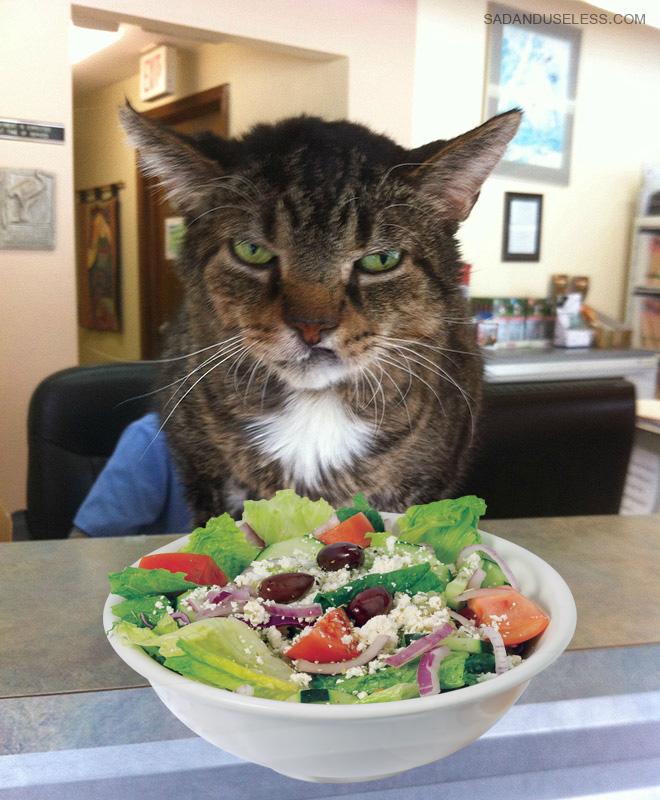 Este gato odia la ensalada.