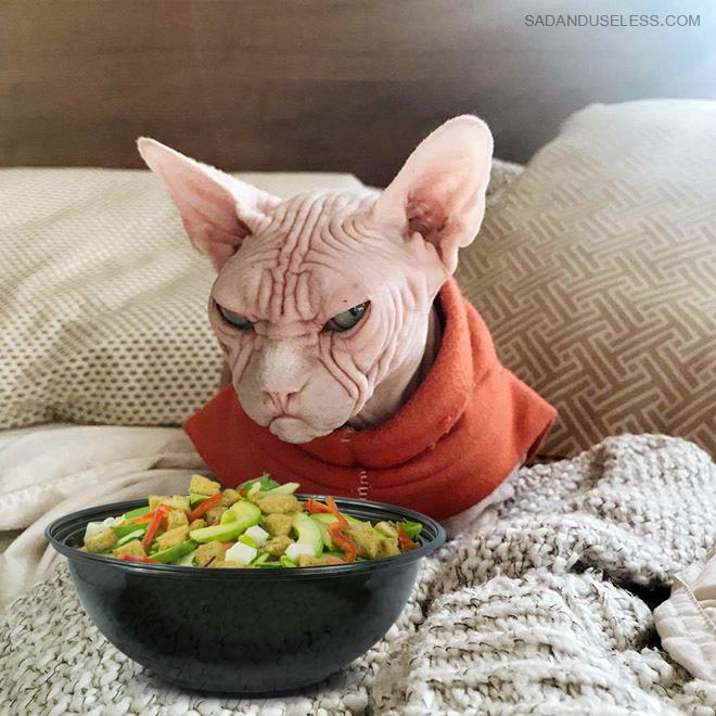 Los gatos desprecian la ensalada.