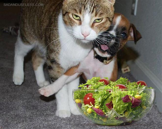 La ensalada le molesta mucho.