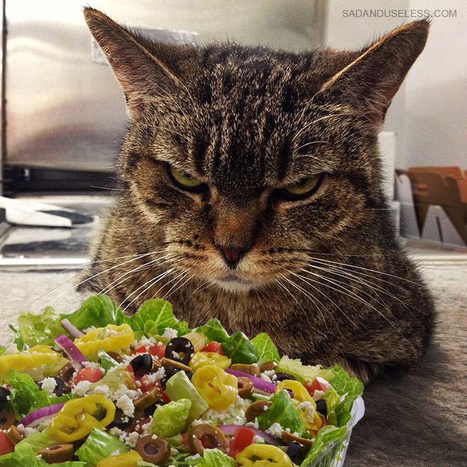 Te odia y odia la ensalada.