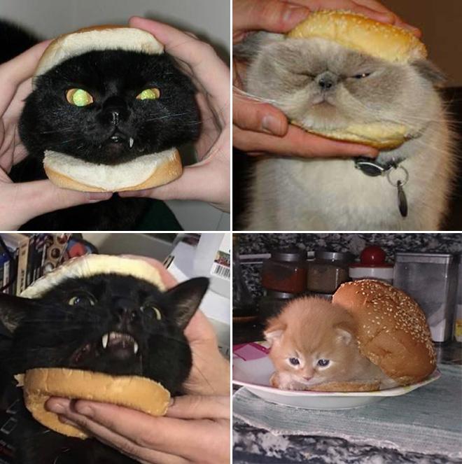 Sándwiches de gato.