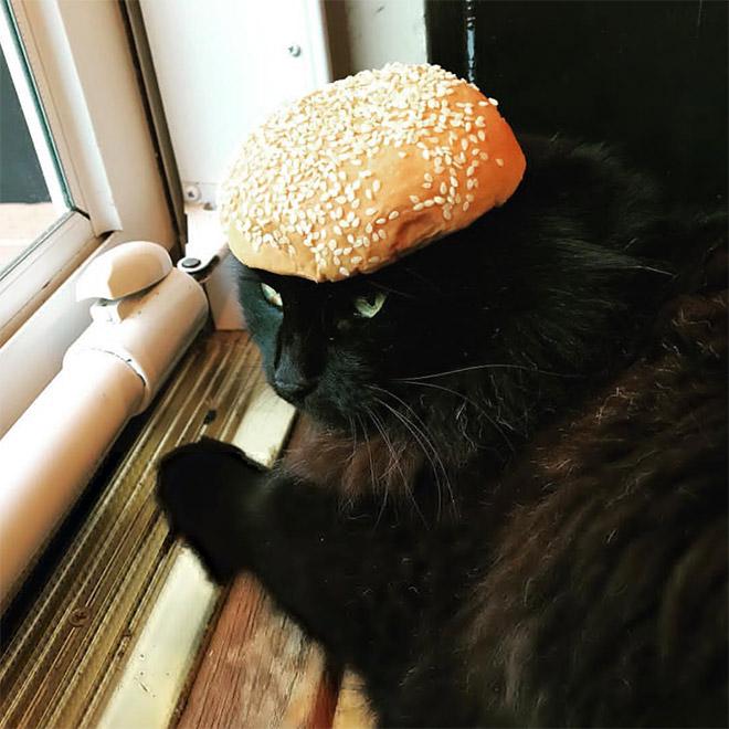 Catburger.