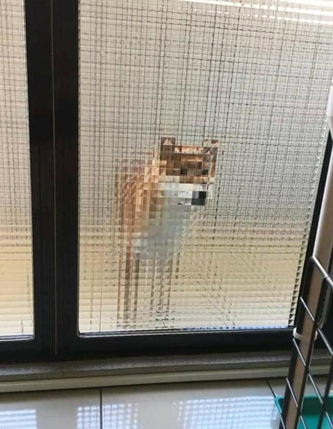 Perro pixelado detrás de puertas de vidrio.