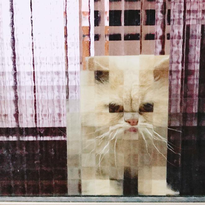 Gato pixelado detrás de puertas de vidrio.